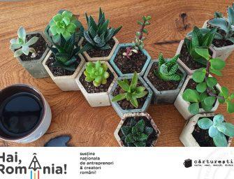 Mihaela Stan despre Plante de aer by Lady and me