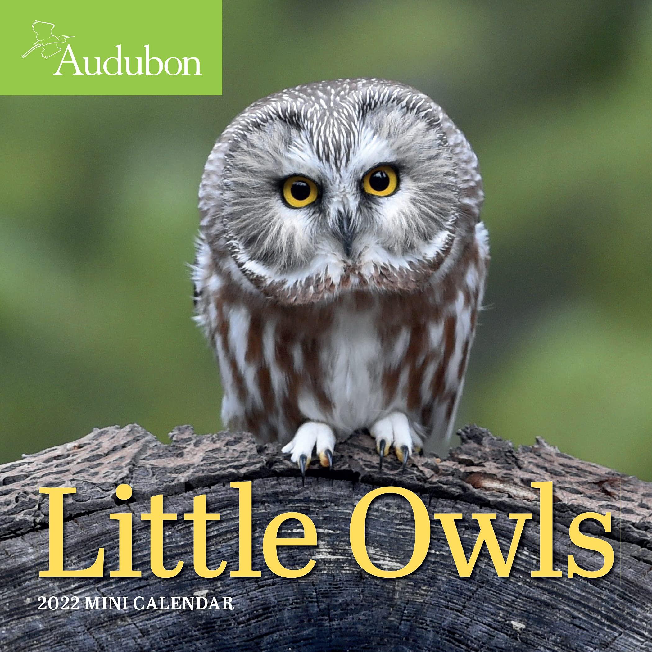 Calendar 2022 - Little Owls | Workman Publishing image0