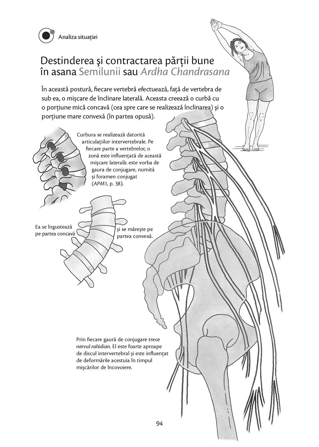 Anatomie Pentru Yoga   Blandine Calais-germain