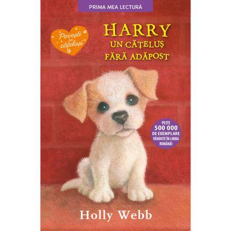 Harry, un catelus fara adapost