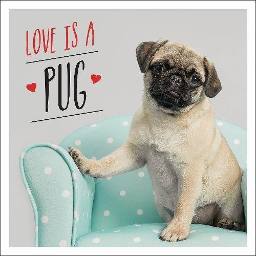 Love is a Pug thumbnail