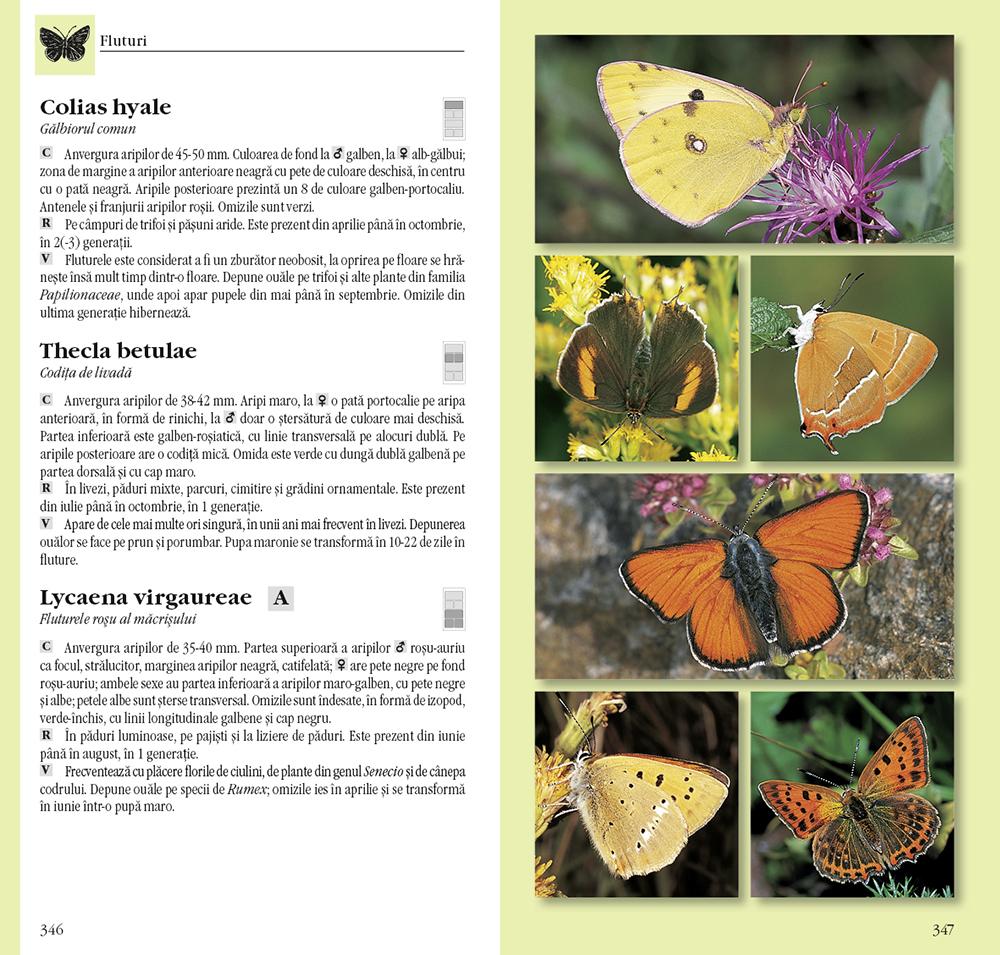 Determinator de plante și animale thumbnail
