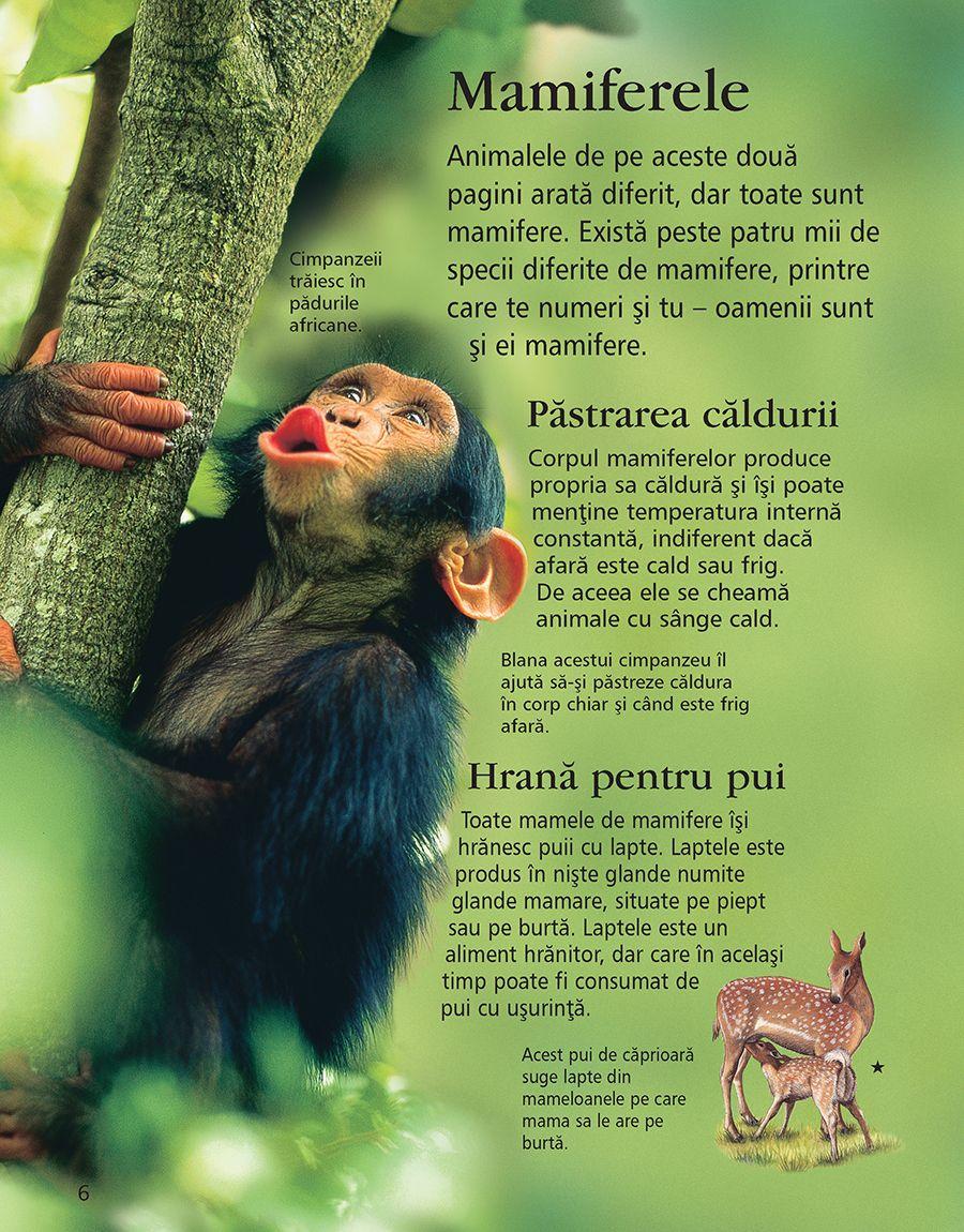 Prima mea enciclopedie despre animale | - 2