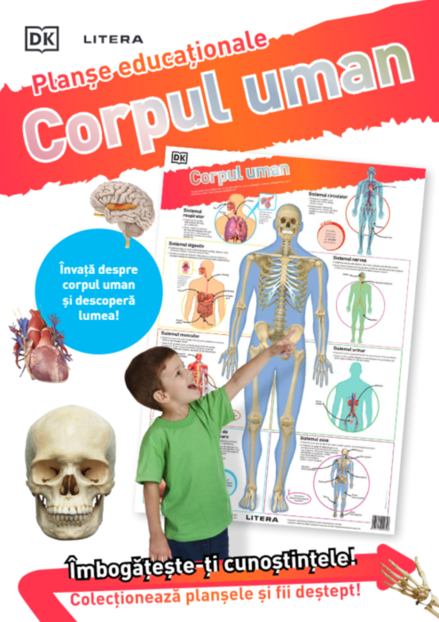 Corpul uman. Planse educationale |