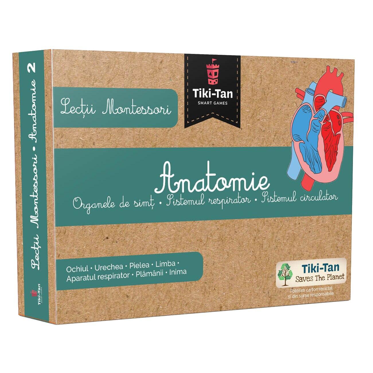 Lectii Montessori - Anatomie - Organe de simt, sistemul respirator, sistemul circulator